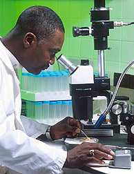 Scientists across the US are feeling the sting of decreased funding (photo: USDA)
